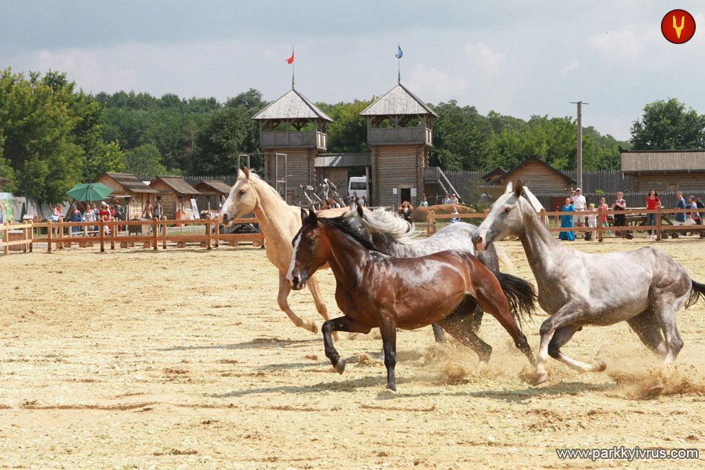 koni v parke kievskaya rus